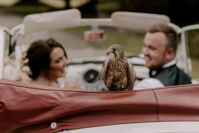 Wedding falconry photo ideas